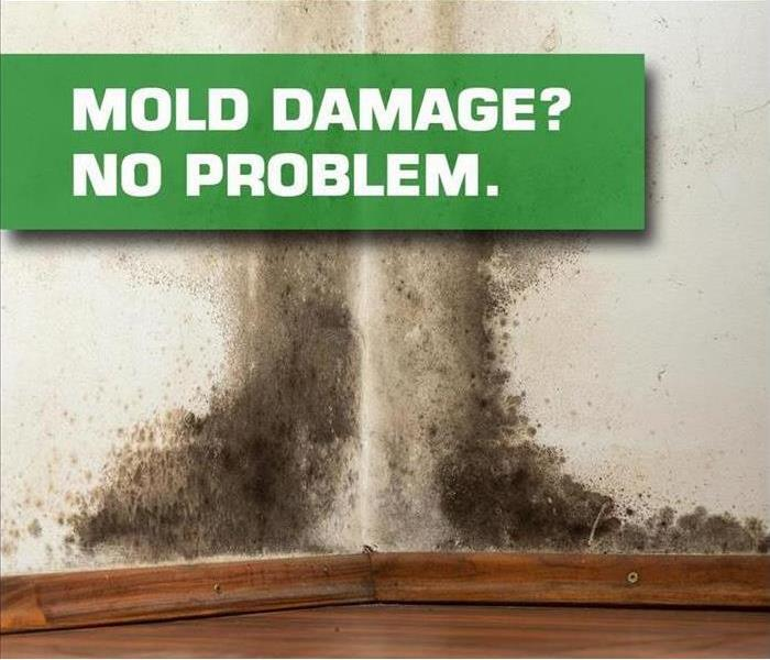 Mold Remediation Conditions in your St. Charles County Homes Might be Right for Mold