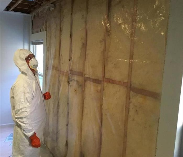 Mold Remediation Mold: Tips on the Invisible Enemy